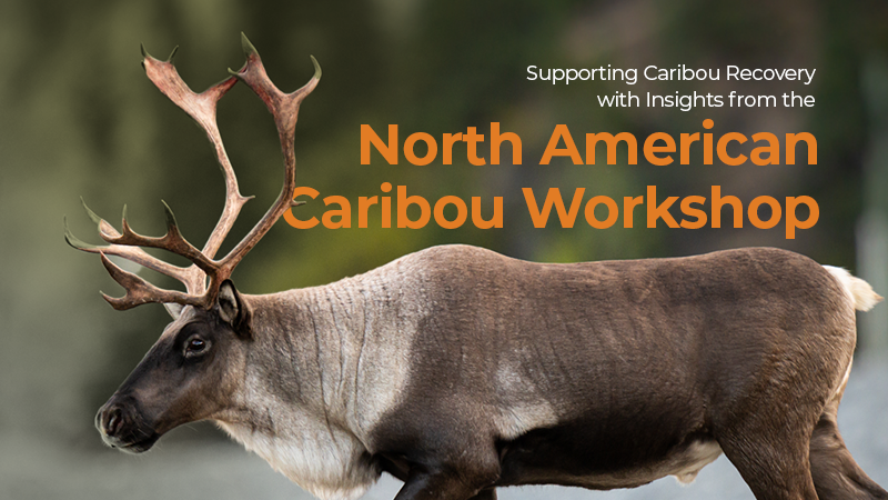The NACW is held every two years and brings together industry, researchers, Indigenous community representatives, resource managers, and decision-makers to discuss and share learnings, ideas, and the challenges of caribou conservation